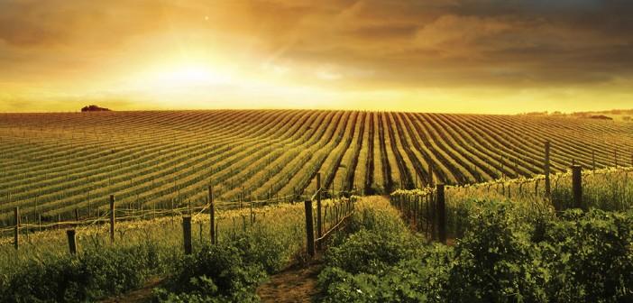 Les régions viticoles : la carte de France des vignobles