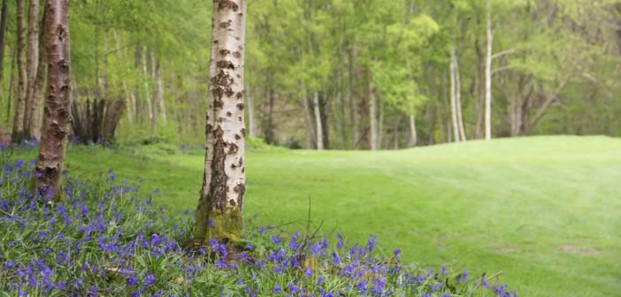 Jardins de Normandie : visitez les arboretums pendant les ponts de mai !