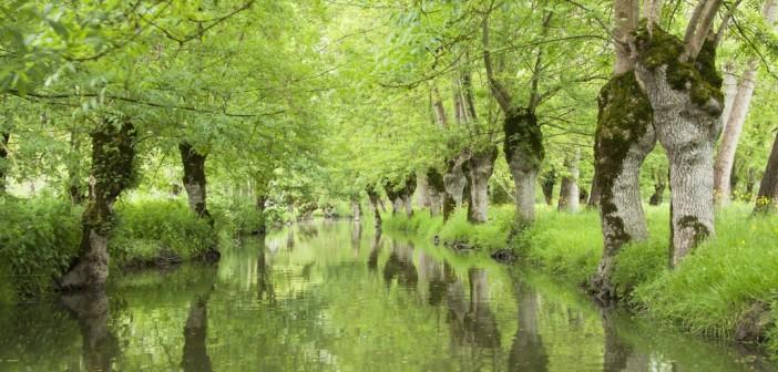 Découvrir le Marais poitevin, la Venise verte