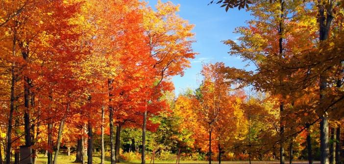 Les-couleurs-de-l-automne-dans-les-regions-françaises