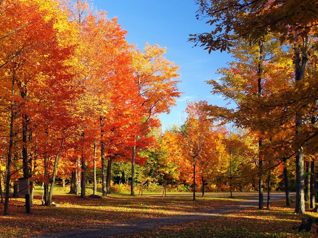 """Résultat de recherche d'images pour """"les couleurs de l'automne"""""""