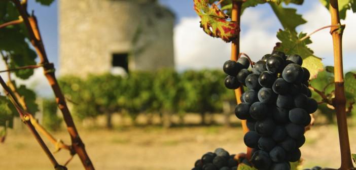 La route des Châteaux du Médoc : architecture historique et grands crus de Bordeaux