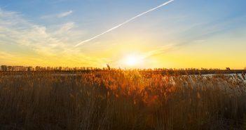 À voir près de Hossegor : la réserve naturelle nationale du marais d'Orx