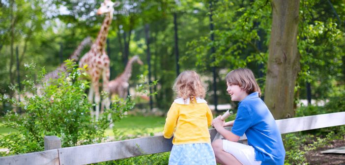 Les plus beaux zoos de France à visiter en famille ou entre amis
