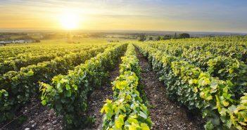 Vignes du Beaujolais: les randonnées à découvrir
