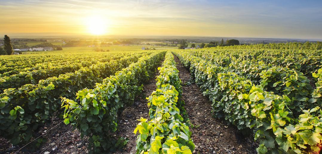 Randonnée vignoble beaujolais
