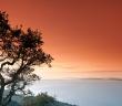 Dracénie dans l'arrière-pays varois